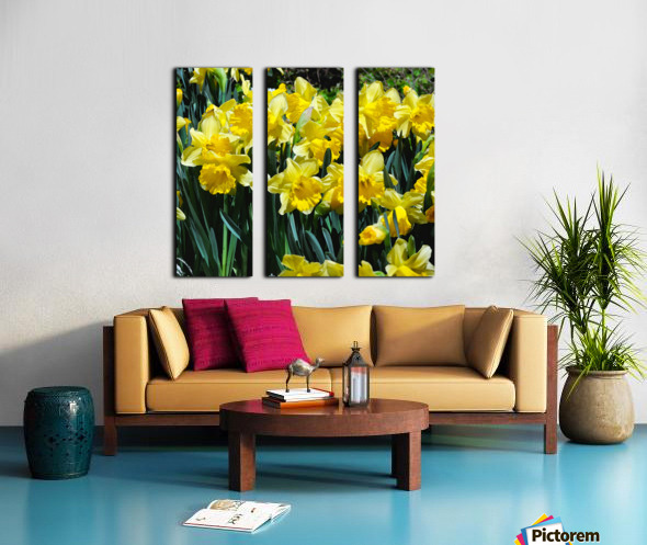 Yellow Daffodils wc Split Canvas print