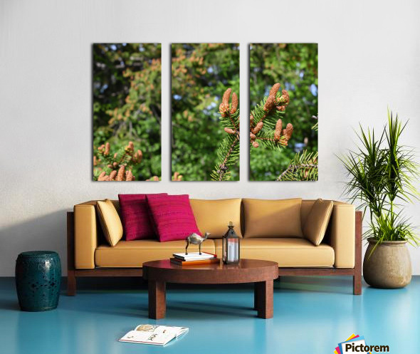 Spruce twig and background Split Canvas print