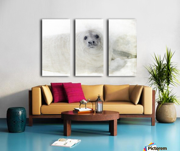 Whiskers Split Canvas print