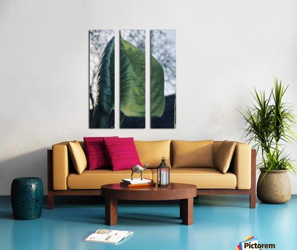 F6F05526 9B0D 4769 8FA5 4C4D8CBF9D82 Split Canvas print