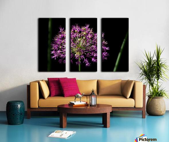 Purple Allium Split Canvas print