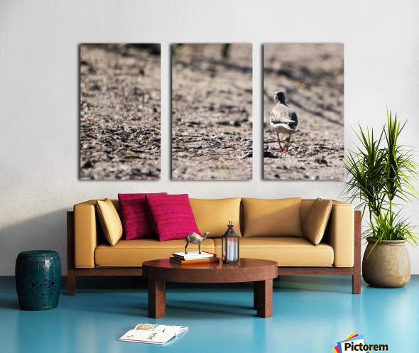 Lonely Sandpiper Split Canvas print