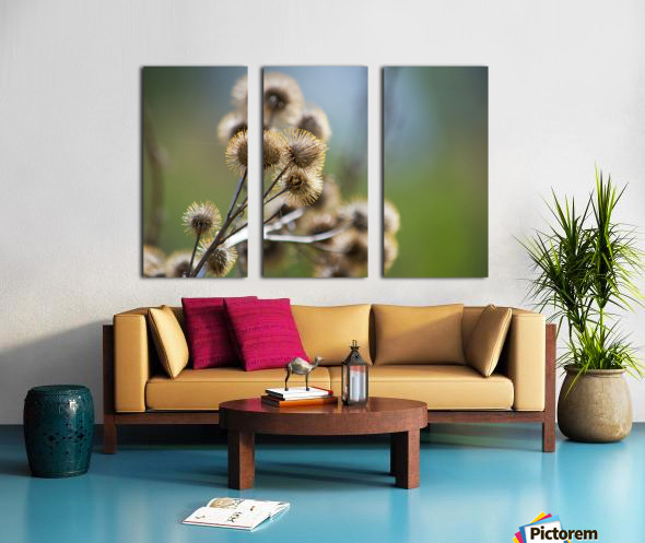 Burdock Bouquet Split Canvas print