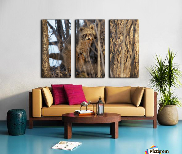 Racoon peeking through twigs Split Canvas print