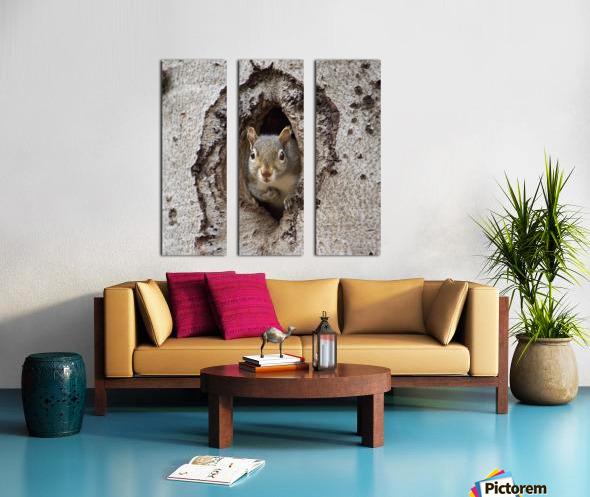 Squirrel in tree hole Split Canvas print