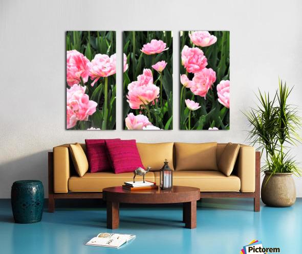 Double Pink Tulips Split Canvas print