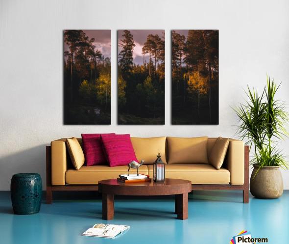 Morning forest Split Canvas print
