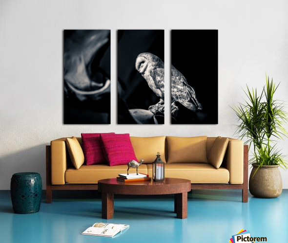 Barn owl Split Canvas print