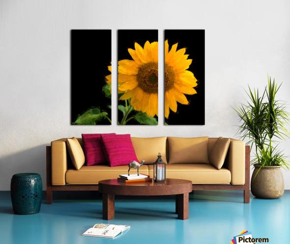 Solitary Sunflower Split Canvas print