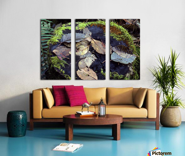 Mossy Stump Split Canvas print