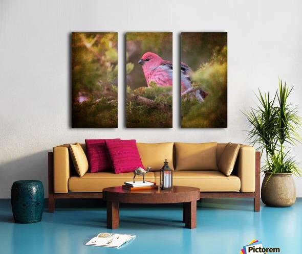 Male Pine Grosbeak Split Canvas print