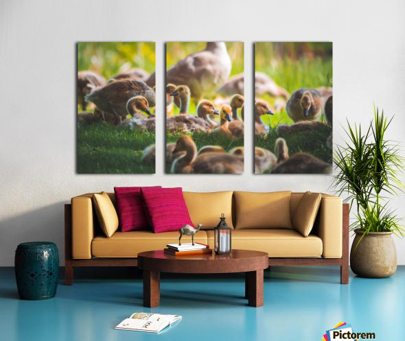 Goslings Gathered Split Canvas print