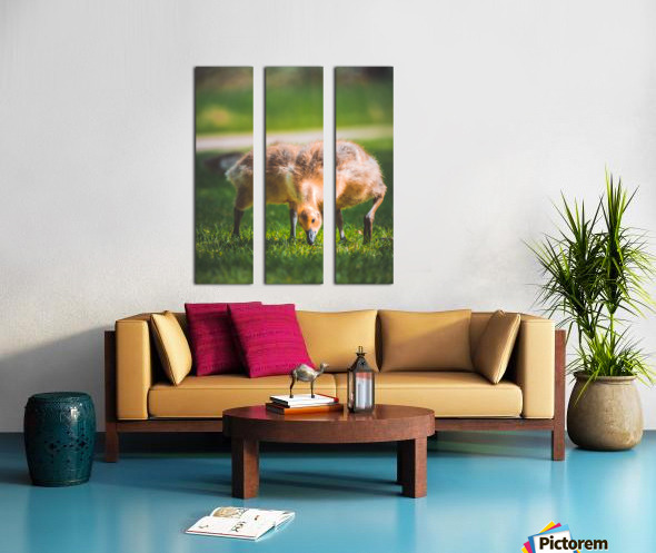 Gooses  Split Canvas print