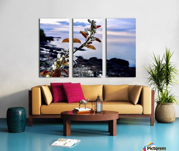Flower on the Shoreline Split Canvas print