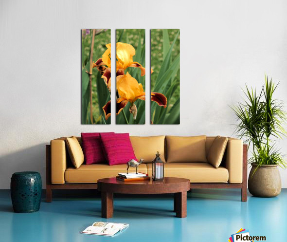 Yellow Brown Iris Split Canvas print