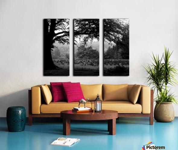Black and White Field Split Canvas print