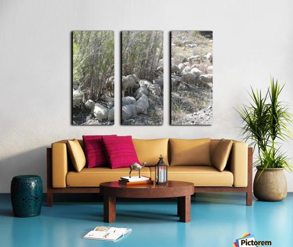 Sheep Huddle Split Canvas print