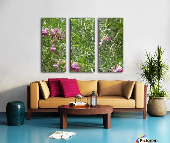 hummingbirdindesertwillow lrg Split Canvas print