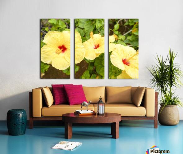 Hibiscus Trio   Tropical Flowers Hawaii Split Canvas print