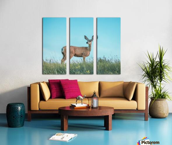 Doe  Split Canvas print