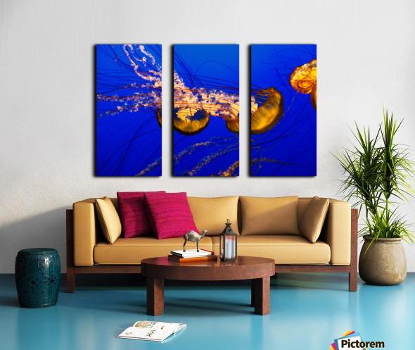 Monterey Jellyfish Split Canvas print