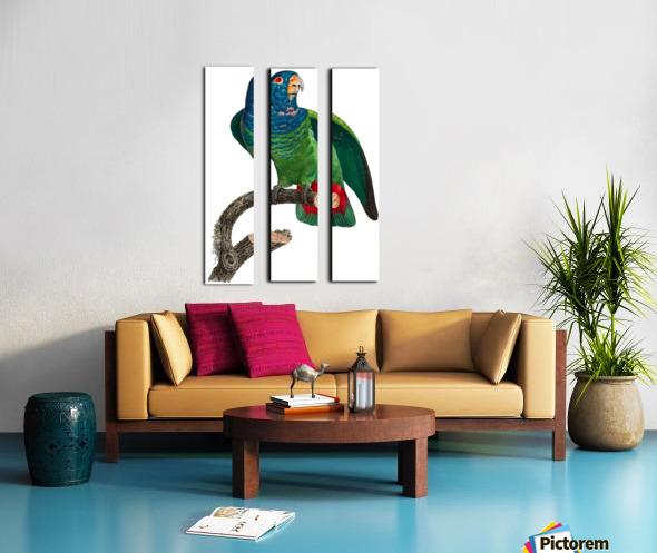 Parrot Print Antique Space Painting Vintage Drawing Poster Wall Art vintage animal parrot photo Tropical Parrot Art  Split Canvas print
