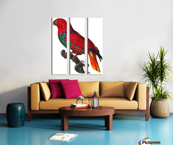Parrot Print Antique Space Painting Vintage Drawing Poster Wall Art Eclectus Parrot Vintage parrot print Parrot Poster Print  Split Canvas print