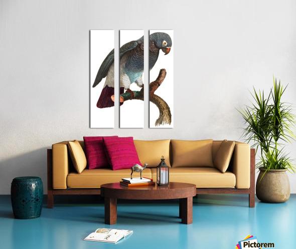Macaw - Birds - Paradise - Tropical- Art Print - Wall Art - Parrot Split Canvas print