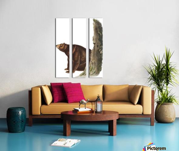 Bear Print Split Canvas print