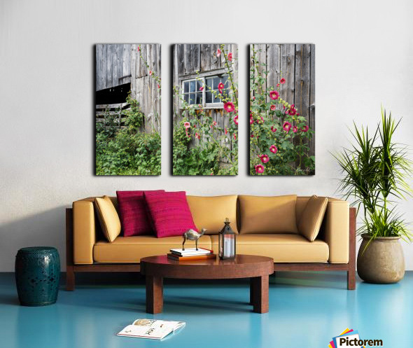 Roses tremieres embellies par une vieille grange - Hollyhocks embellished by an old barn Split Canvas print