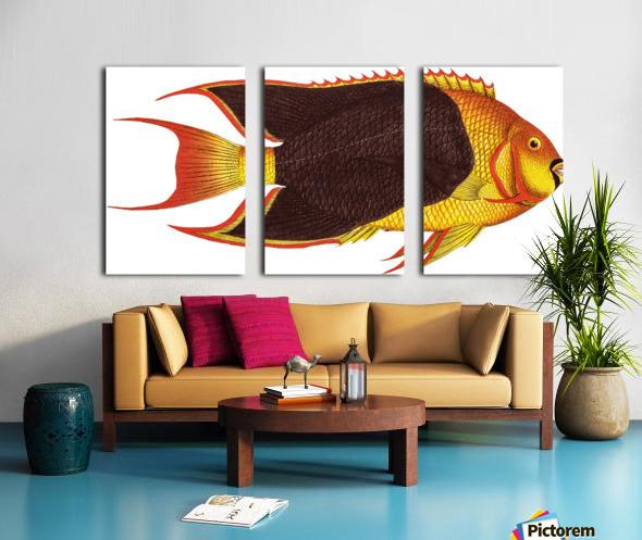 Vintage Fish Wall Art Prints  Split Canvas print