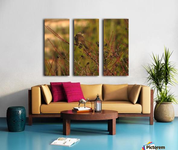 Sparrow on Wild Rose  Split Canvas print