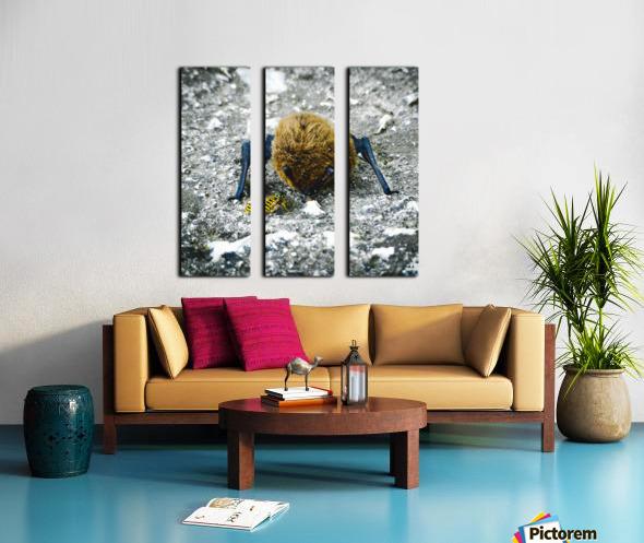 300 Carr   Split Canvas print