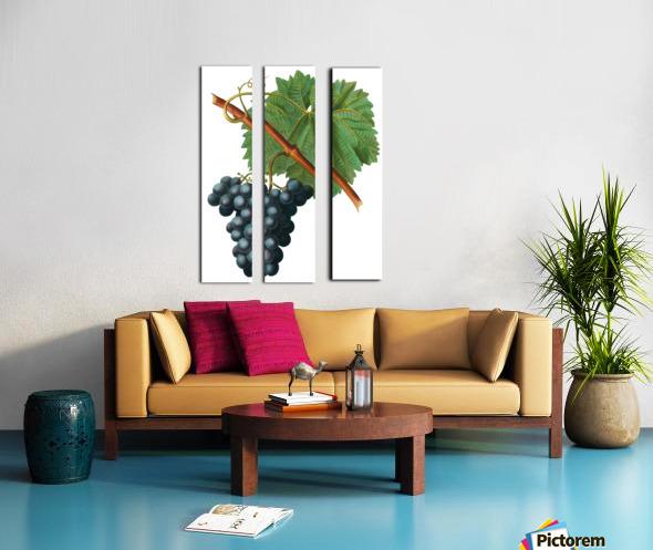 Grape Spanna Antique Art Kitchen Art Grapes Vintage Grapes Pic Grape Vine Grape Leaves Winery Spanna Grapes Wine Blued 02Element 3 Split Canvas print