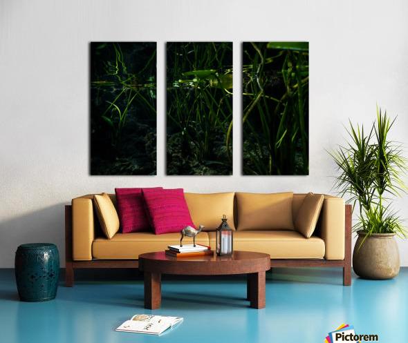 Reflecting Lily Split Canvas print