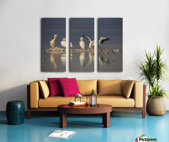 Pelican Reflections 2 Split Canvas print