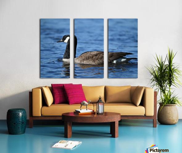 Canada Goose on water Split Canvas print