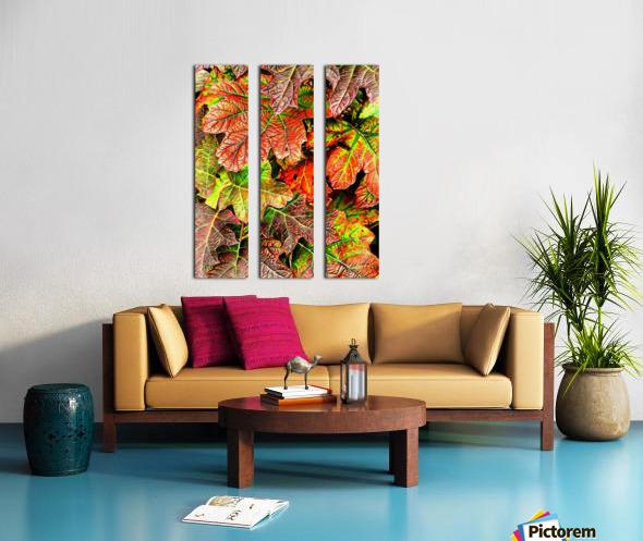 Oak Leaved Hydrangea In Autumn Split Canvas print