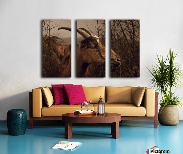 One more thorn  Split Canvas print