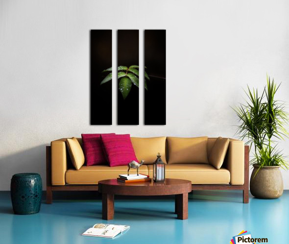 Isolation  Split Canvas print
