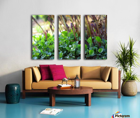 White sweet violets and peony sprouts Split Canvas print