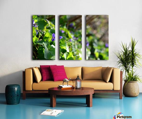 Spring sweet violets in the garden Split Canvas print