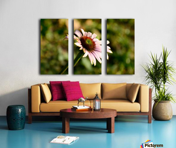 Autumn Echinacea Split Canvas print