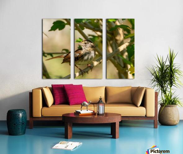 Sparrow Split Canvas print