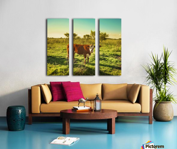 Cow in the Field Watching the Camera Split Canvas print