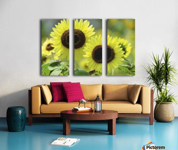 landscape_2_0976 Split Canvas print