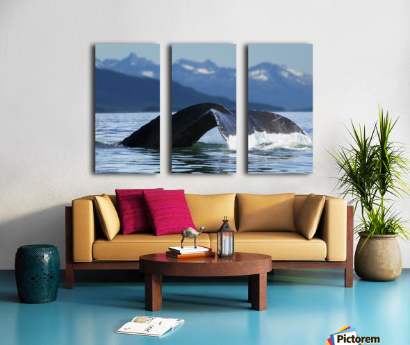 A Humpback whale lifts its flukes as it returns to the depths to feed in the bountiful waters of Alaska's Inside Passage, Tracy Arm in the distance, Stephens Passage, near Juneau. Split Canvas print
