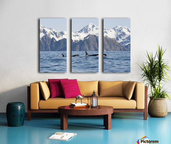 killer whale, or orcas, Orcinus orca, cow and calf swimming in Resurrection Bay, Kenai Fjords National Park, outside Seward, southcentral Alaska, spring Split Canvas print