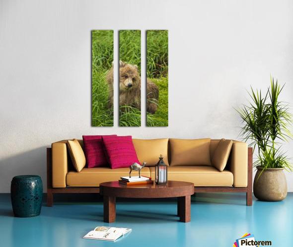 Brown bear (Ursus arctos) cub close-up, sitting in grass, Katmai National Park and Preserve, Southwest Alaska, USA Split Canvas print