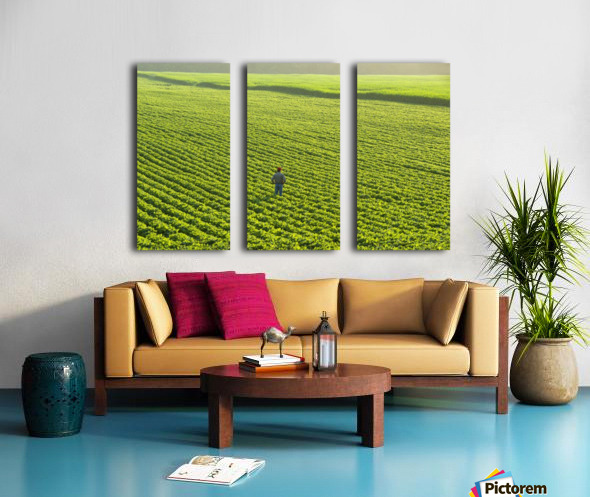 Portrait of a farmer walking through a large green soybean field in central Iowa in summer; Iowa, United States of America Split Canvas print